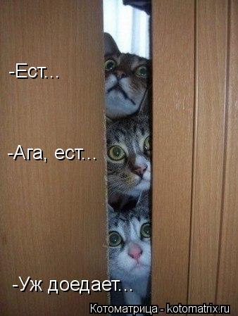 Котоматрица: -Ест... -Ага, ест... -Уж доедает...