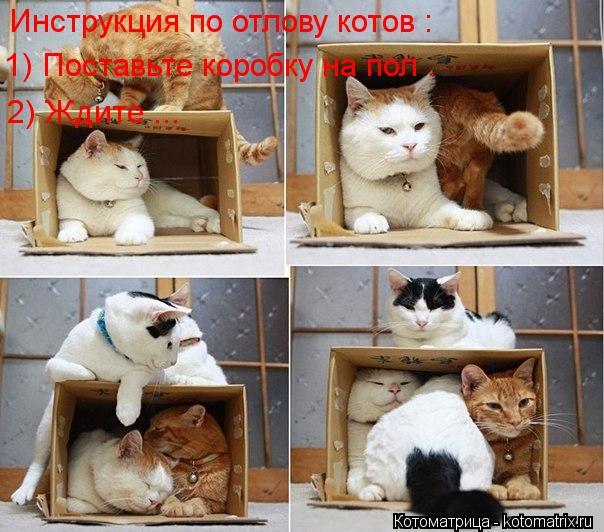 Котоматрица: Инструкция по отлову котов : 2) Ждите ... 1) Поставьте коробку на пол .