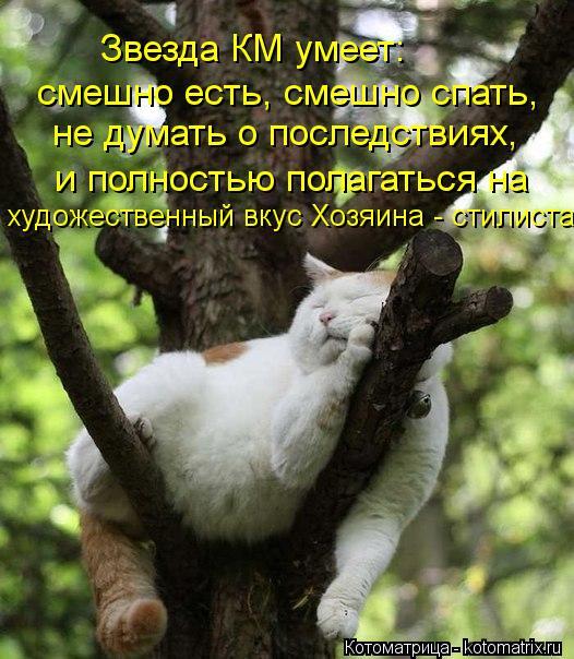 Котоматрица: Звезда КМ умеет: смешно есть, смешно спать, не думать о последствиях, и полностью полагаться на  художественный вкус Хозяина - стилиста...