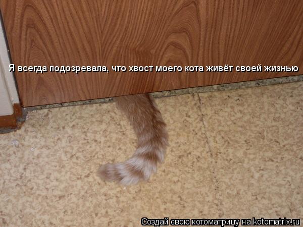 Котоматрица: Я всегда подозревала, что хвост моего кота живёт своей жизнью