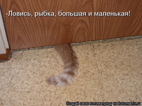 Котоматрица: -Ловись, рыбка, большая и маленькая!