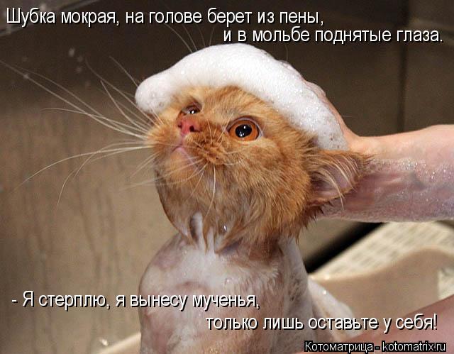Котоматрица: Шубка мокрая, на голове берет из пены,  и в мольбе поднятые глаза. - Я стерплю, я вынесу мученья,  только лишь оставьте у себя!