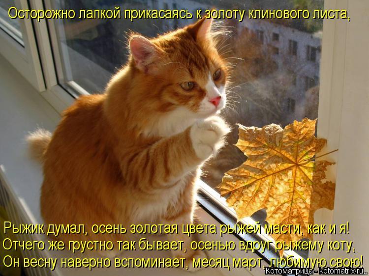 Котоматрица: Осторожно лапкой прикасаясь к золоту клинового листа,  Рыжик думал, осень золотая цвета рыжей масти, как и я! Отчего же грустно так бывает, о