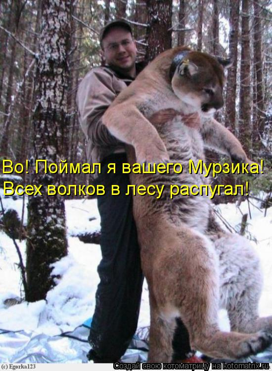 Котоматрица: Во! Поймал я вашего Мурзика! Всех волков в лесу распугал!