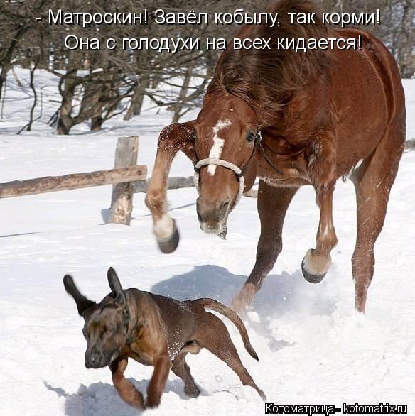 Котоматрица: - Матроскин! Завёл кобылу, так корми! Она с голодухи на всех кидается!