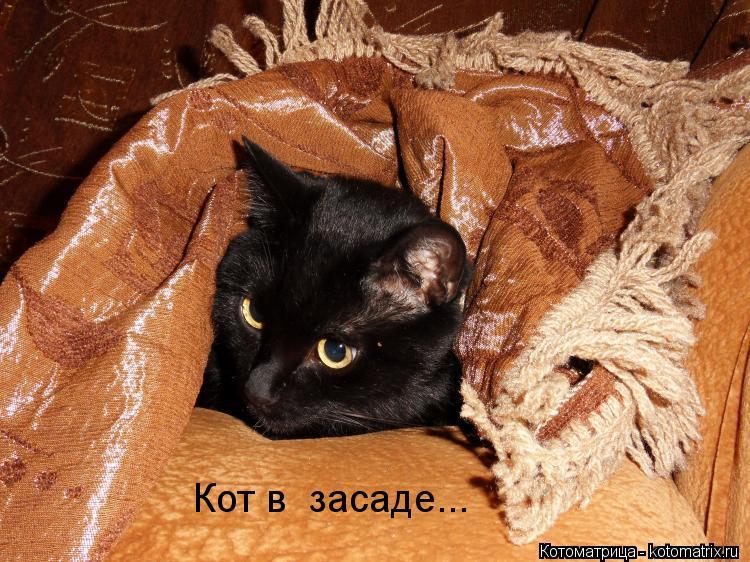Котоматрица: Кот в  засаде...