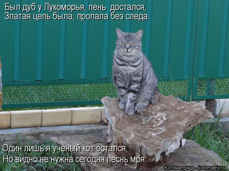 Котоматрица: Был дуб у Лукоморья, пень  достался, Златая цепь была, пропала без следа. Один лишь я ученый кот остался, Но видно не нужна сегодня песнь моя.