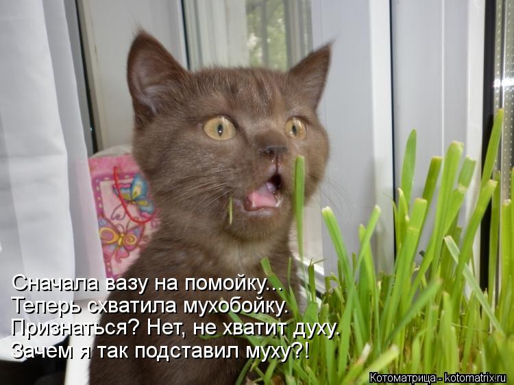 Котоматрица: Сначала вазу на помойку... Теперь схватила мухобойку. Признаться? Нет, не хватит духу. Зачем я так подставил муху?!