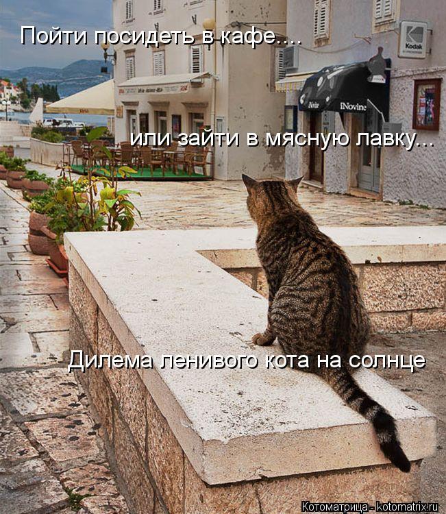 Котоматрица: Пойти посидеть в кафе.... или зайти в мясную лавку... Дилема ленивого кота на солнце