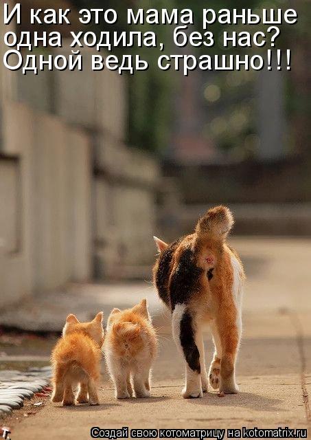 Котоматрица: И как это мама раньше одна ходила, без нас? Одной ведь страшно!!!