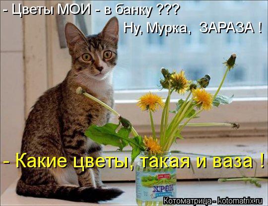 Котоматрица: Ну, Мурка,  ЗАРАЗА ! - Цветы МОИ - в банку ??? - Какие цветы, такая и ваза !