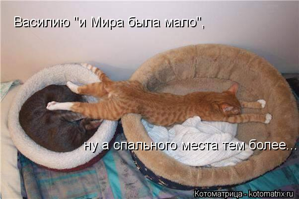 """Котоматрица: Василию """"и Мира была мало"""", ну а спального места тем более...."""