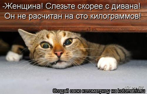 Котоматрица: -Женщина! Слезьте скорее с дивана! Он не расчитан на сто килограммов!
