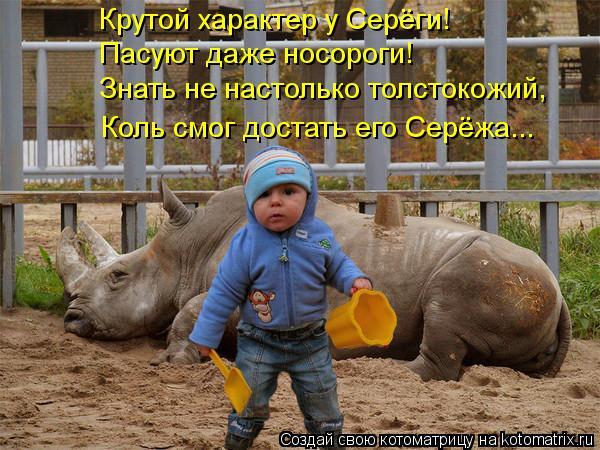 Котоматрица: Крутой характер у Серёги! Пасуют даже носороги! Знать не настолько толстокожий, Коль смог достать его Серёжа...