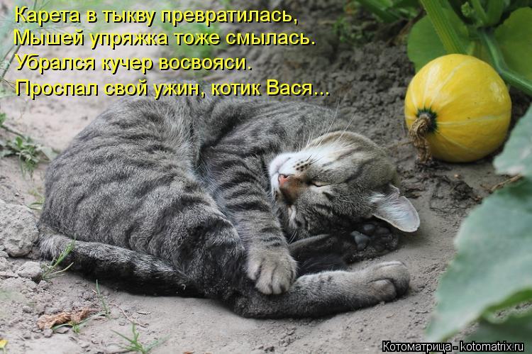 Котоматрица: Карета в тыкву превратилась, Мышей упряжка тоже смылась. Убрался кучер восвояси.  Проспал свой ужин, котик Вася...