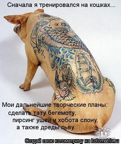 Котоматрица: Мои дальнейшие творческие планы: сделать тату бегемоту, пирсинг ушей и хобота слону, а также дреды льву. Сначала я тренировался на кошках...
