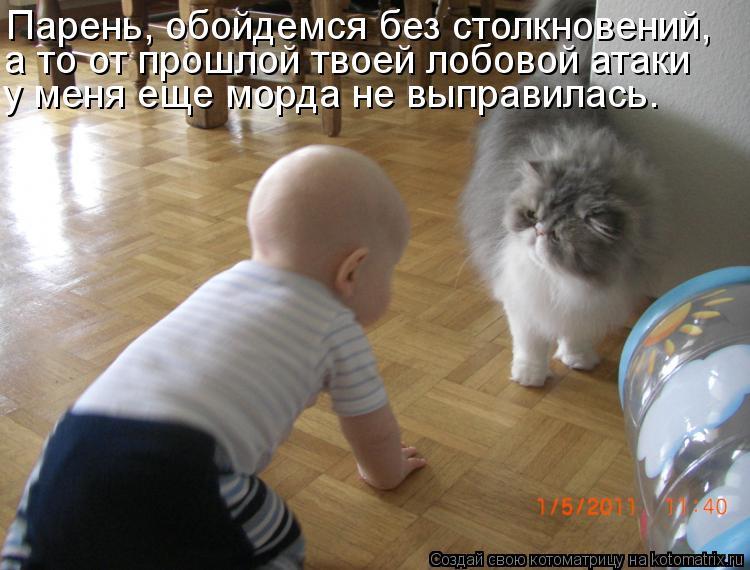 Котоматрица: Парень, обойдемся без столкновений, а то от прошлой твоей лобовой атаки у меня еще морда не выправилась.