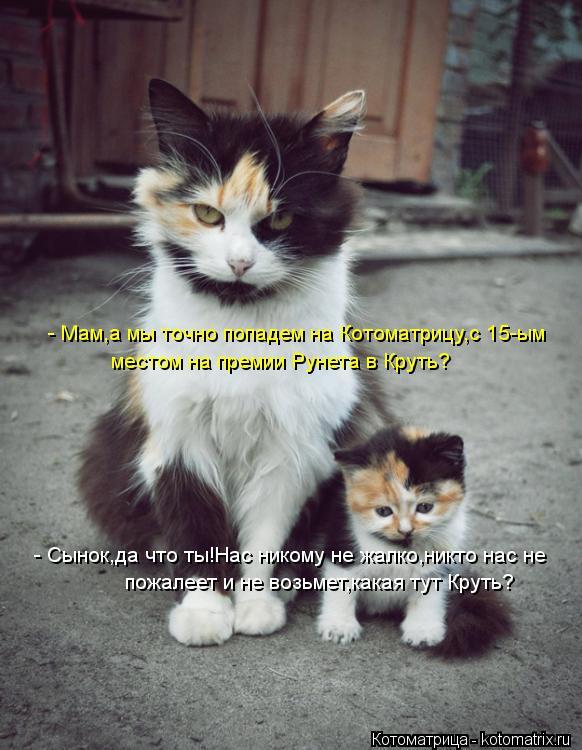 Котоматрица: - Мам,а мы точно попадем на Котоматрицу,с 15-ым местом на премии Рунета в Круть?  - Сынок,да что ты!Нас никому не жалко,никто нас не  пожалеет и н