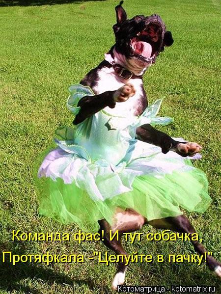 "Котоматрица: Команда фас! И тут собачка, Протяфкала -""Целуйте в пачку!"""