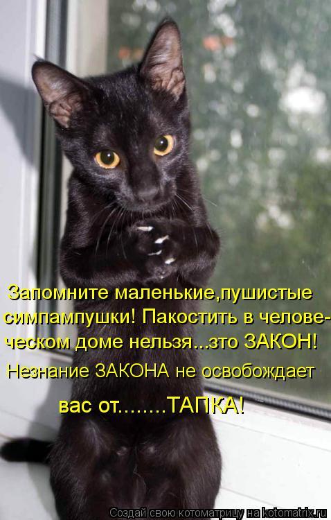 Котоматрица: Запомните маленькие,пушистые симпампушки! Пакостить в челове- ческом доме нельзя...зто ЗАКОН! Незнание ЗАКОНА не освобождает  вас от........ТАП