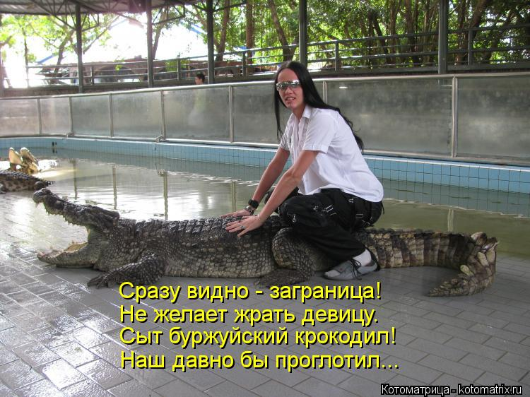 Котоматрица: Сразу видно - заграница! Не желает жрать девицу. Сыт буржуйский крокодил! Наш давно бы проглотил...