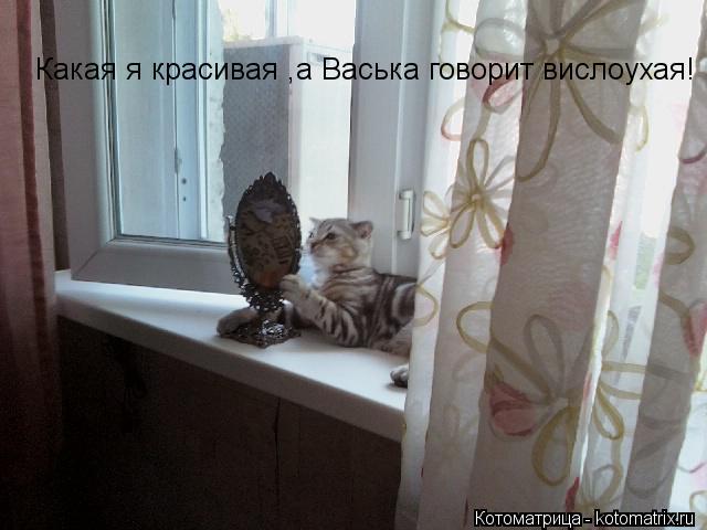 Котоматрица: Какая я красивая ,а Васька говорит вислоухая!
