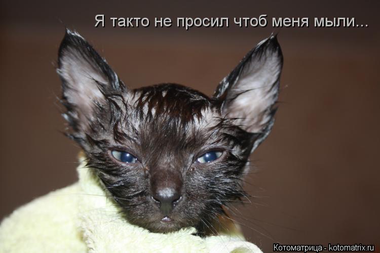 Котоматрица: Я такто не просил чтоб меня мыли...