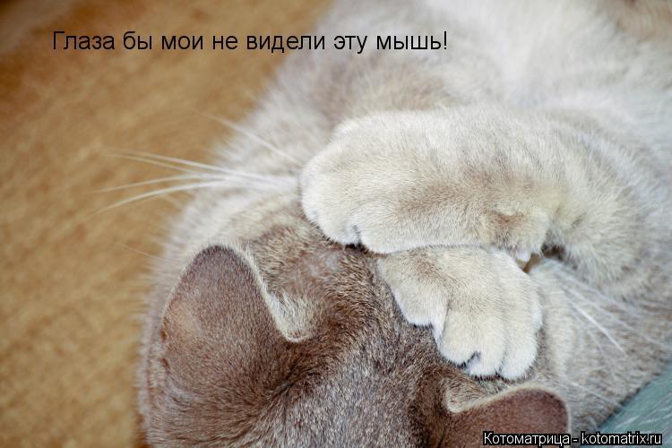 Котоматрица: Глаза бы мои не видели эту мышь!