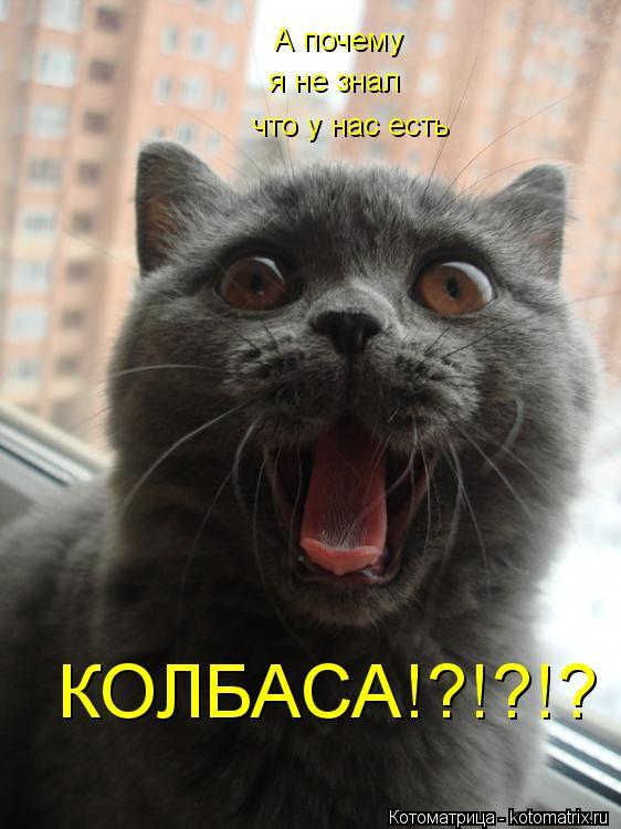 Котоматрица: А почему  я не знал что у нас есть  КОЛБАСА!?!?!?