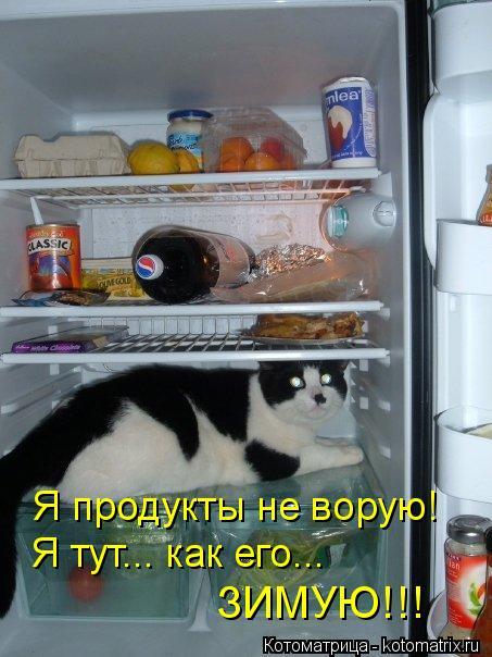 Котоматрица: Я продукты не ворую!  Я тут... как его...  ЗИМУЮ!!!