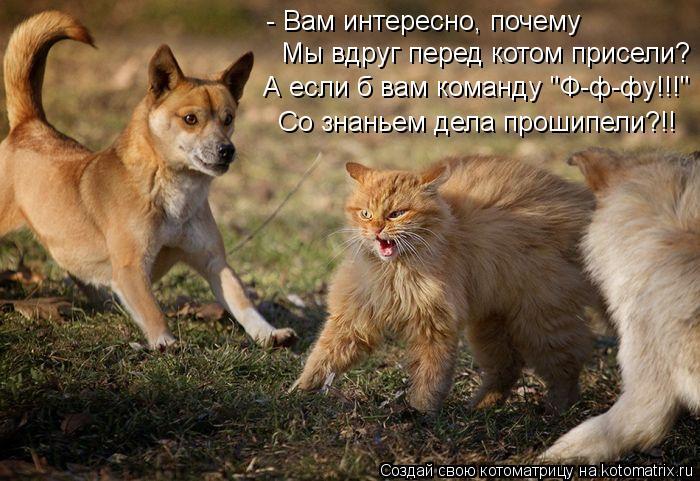 """Котоматрица: - Вам интересно, почему Мы вдруг перед котом присели? А если б вам команду """"Ф-ф-фу!!!"""" Со знаньем дела прошипели?!!"""