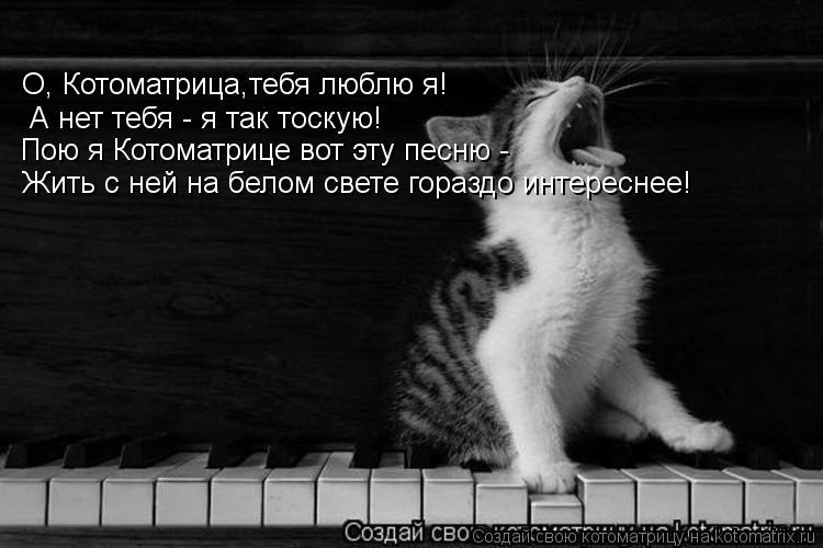 Котоматрица: О, Котоматрица,тебя люблю я! А нет тебя - я так тоскую! Пою я Котоматрице вот эту песню -  Жить с ней на белом свете гораздо интереснее!