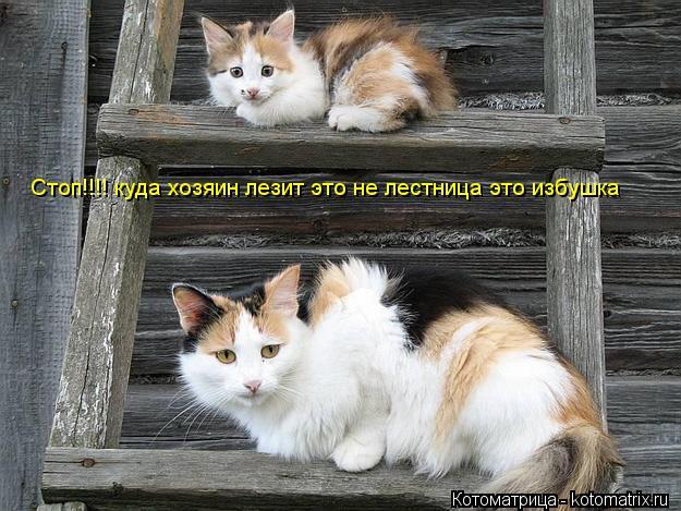 Котоматрица: Стоп!!!! куда хозяин лезит это не лестница это избушка