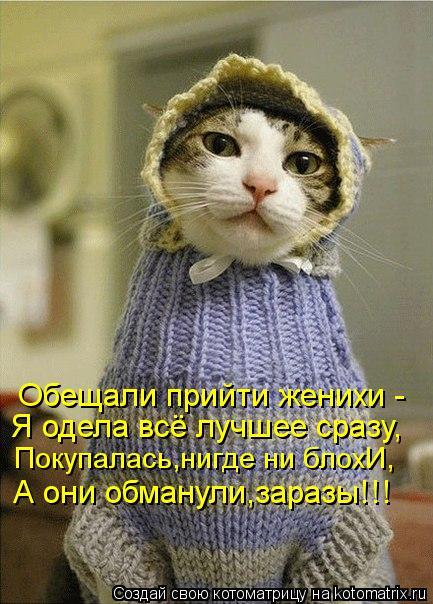 Котоматрица: Обещали прийти женихи - Я одела всё лучшее сразу, Покупалась,нигде ни блохИ, А они обманули,заразы!!!