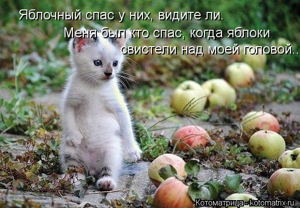 Котоматрица: Яблочный спас у них, видите ли. Меня был кто спас, когда яблоки свистели над моей головой...