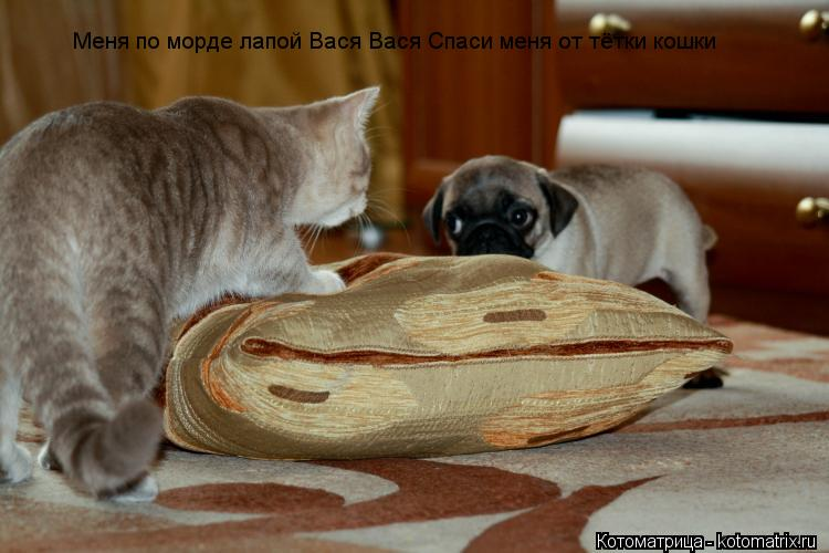 Котоматрица: Меня по морде лапой Вася Вася Спаси меня от тётки кошки