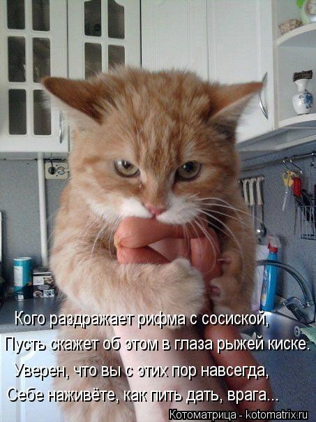 Котоматрица: Кого раздражает рифма с сосиской, Пусть скажет об этом в глаза рыжей киске. Уверен, что вы с этих пор навсегда, Себе наживёте, как пить дать, в