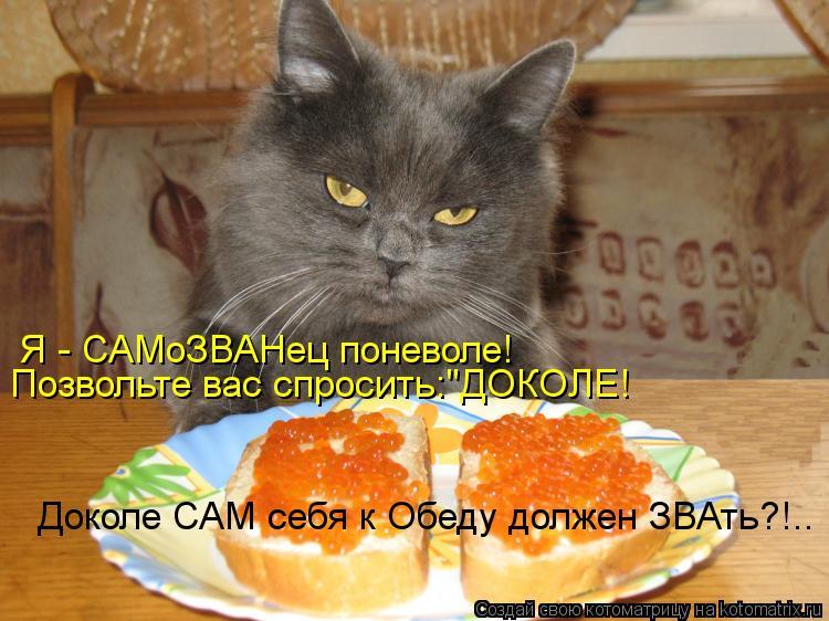 """Котоматрица: Я - САМоЗВАНец поневоле! Позвольте вас спросить:""""ДОКОЛЕ! Доколе САМ себя к Обеду должен ЗВАть?!.."""