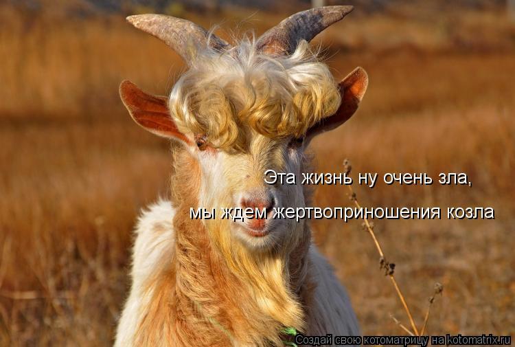 Котоматрица: Эта жизнь ну очень зла,  мы ждем жертвоприношения козла
