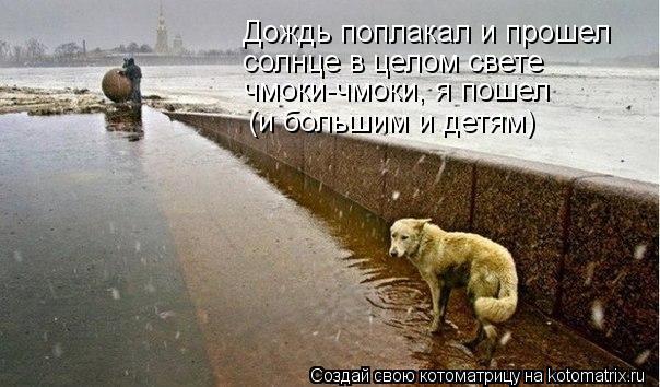 Котоматрица: Дождь поплакал и прошел солнце в целом свете чмоки-чмоки, я пошел (и большим и детям)