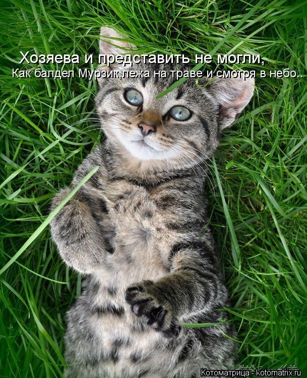 Котоматрица: Хозяева и представить не могли, Как балдел Мурзик,лежа на траве и смотря в небо..