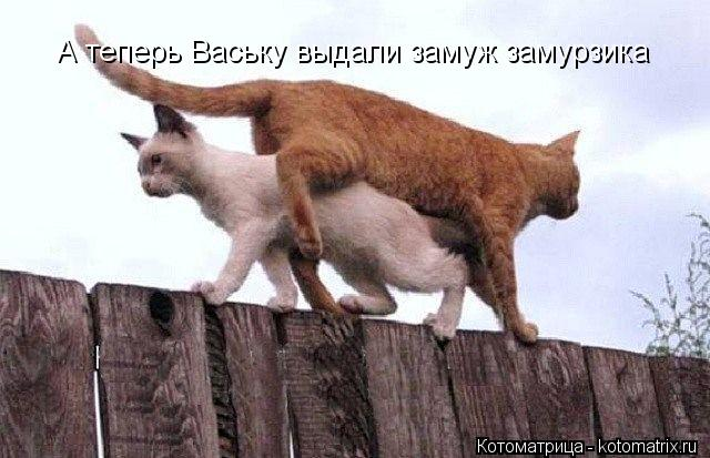 Котоматрица: А теперь Ваську выдали замуж замурзика