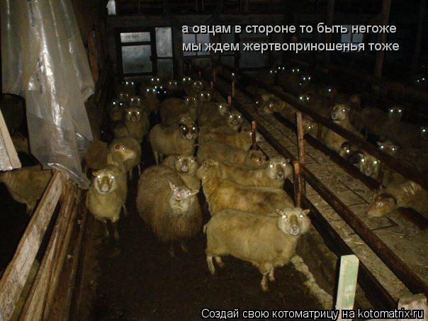 Котоматрица: а овцам в стороне то быть негоже мы ждем жертвоприношенья тоже