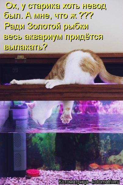 Котоматрица: Ох, у старика хоть невод был. А мне, что ж ??? Ради Золотой рыбки весь аквариум придётся  вылакать?