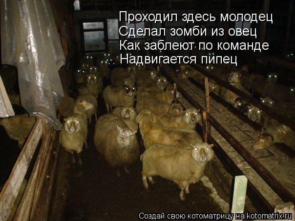 Котоматрица: Проходил здесь молодец Сделал зомби из овец Как заблеют по команде Надвигается пипец