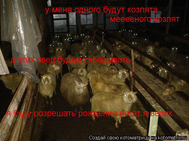Котоматрица: у меня одного будут козлята а этих овец будем скрещивать мееееного козлят я буду розрешать рождения ягнят я велик