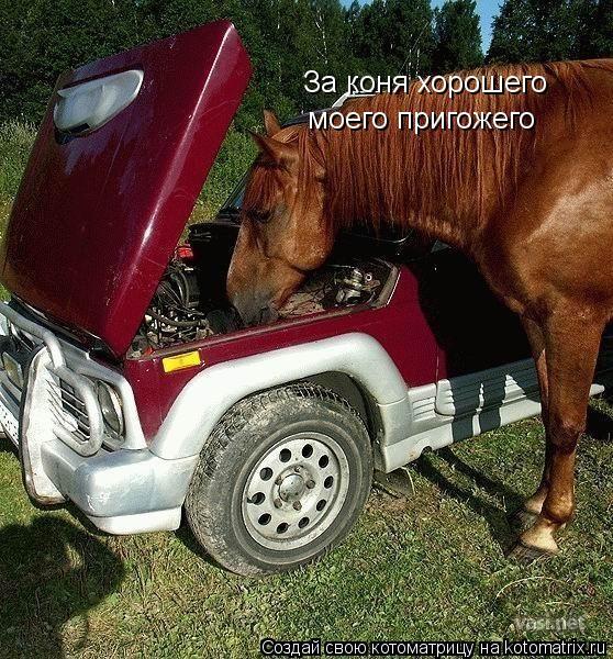 Котоматрица: За коня хорошего моего пригожего