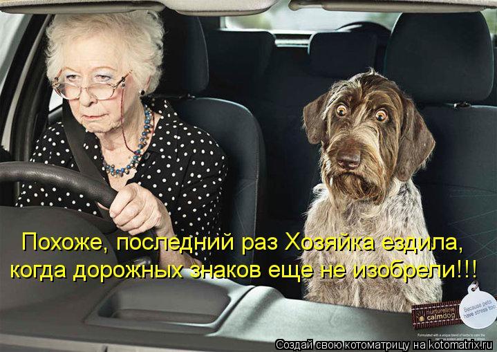 Котоматрица: Похоже, последний раз Хозяйка ездила, когда дорожных знаков еще не изобрели!!!