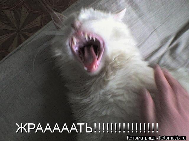 Котоматрица: ЖРАААААТЬ!!!!!!!!!!!!!!!!