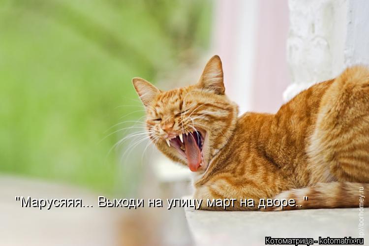 "Котоматрица: ""Марусяяя... Выходи на улицу март на дворе.."""